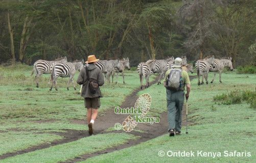 Tourism in Kenya, Private safaris, Africa.