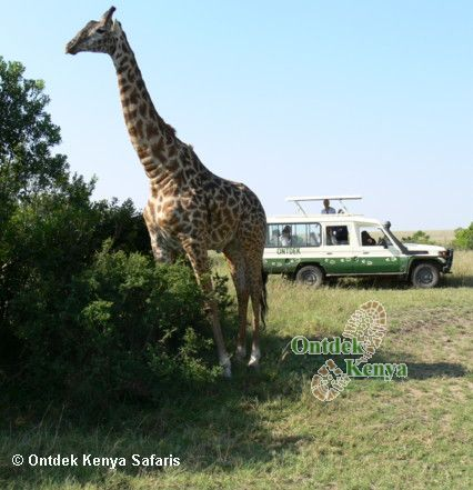 African luxury safaris, Masai Mara, 4WD safari vehicles