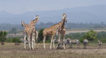 Africa safari animals, Kenya Safaris away from Mass Tourism.