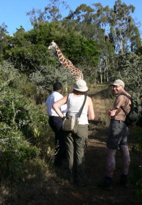 Kenya safari reviews, hiking vacation at the Aberdare game sanctuary.