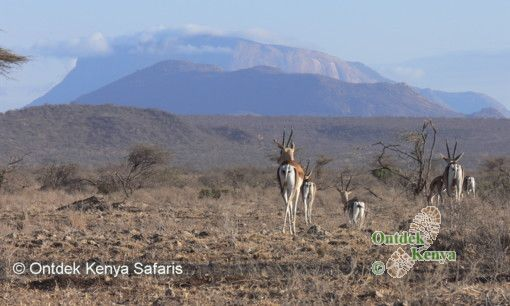 African travel reviews in Samburu