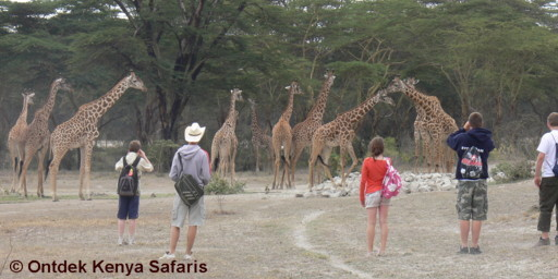 Students spring break vacations.  Africa School tours. Walking safari at Crater Lake game conservancy, Kenya.