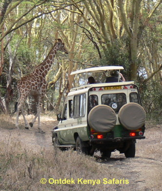 Kenya family tours: Solio game drive.