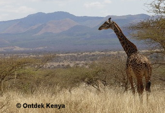 photo tours in Tsavo NP