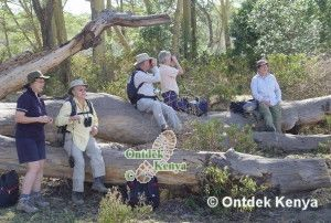 Africa Safari for seniors - Ontdek Kenya Safaris