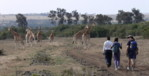 Africa Travel and hiking trips; Kenya