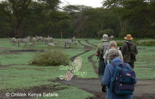 Eco friendly walking safari in Kenya
