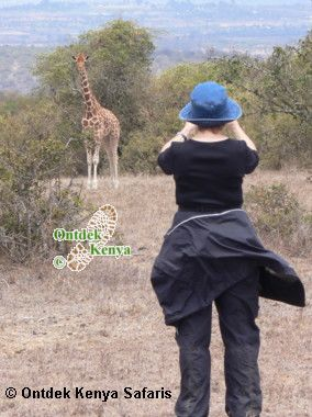 Africa safari trip reviews, Reticulated Giraffe, Sangare Ranch