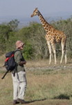 Solo women adventure travel - walking with Reticulated Giraffe
