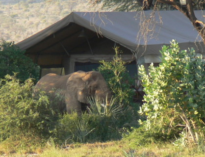 olifant,elephant bedroom camp