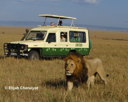 wildsafari in amboseli